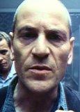 Dobermann Bild 3