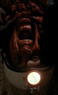 Alien - Die Saat des Grauens kehrt zurück Bild 2