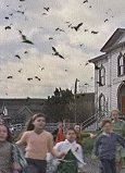 Die Vögel Bild 4