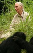 Jane's Journey - Die Lebensreise der Jane Goodall Bild 2