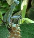Bugs! Bild 2