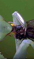 Bugs! Bild 4
